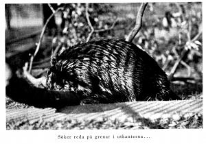 Behm, p.136 (1922)