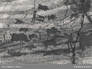 Rock art from Uppland, Sweden, showing wild boar. Enköpings museum, EK0136.