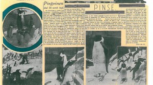 """Penguins will be a Norwegian bird"" according to this article in Tidens tegn, 4 June 1938."