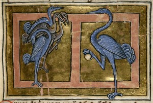 Cranes in a medieval bestiary from England, dated to first quarter of the 13th c. British Library, Royal 12 C XIX f. 40. Image in public domain.