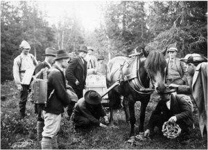 """A photo taken by Nils Thomasson during the trip to release the beavers in 1922.  The horse needed to wear special shoes to walk through the marsh. Printed in Eric Festin, """"Bäverns Återinplantering,"""" Jämten (1922)"""