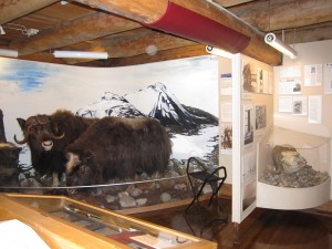 Hunting display with skull and taxidermy specimens of 2 adults and 1 calf