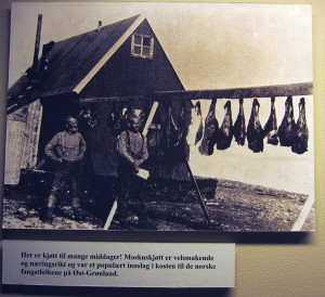 Photo showing muskox meat hung up to dry on East Greenland. Polar Museum, Tromsø, Norway. Photo by D. Jørgensen.