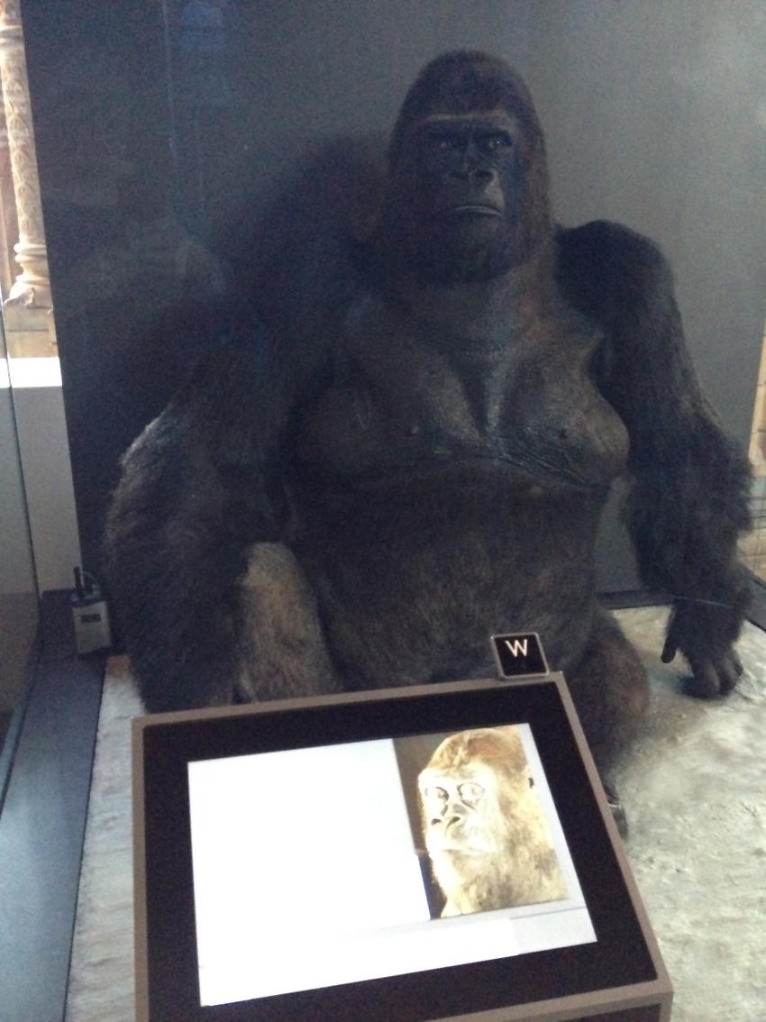 D Gorilla Glass