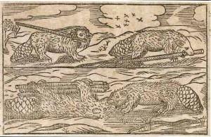 Picture of beavers dragging a companion with load of sticks from J. Bjurberg, Castor breviter delineastus (1687)