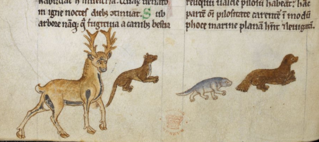 Gerald of Wales' own drawings of animals he encountered on his journeys. The beaver is the one on the far right. British Library, Royal MS 13 B VIII, fo. 10v