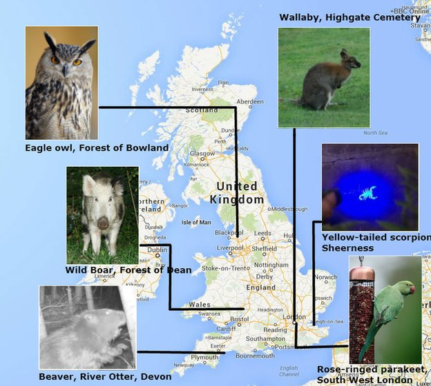 When did beaver become non native in england the return of native map accompanying the news article aliens among us what strange species are making england publicscrutiny Images