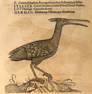 The northern bald ibis, known as Waldrapp in German, as described by Conrad Gessner. Image from Icones avium omnium (1555).