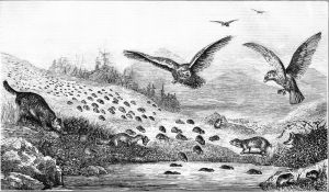 Lemmings in migration. Popular Science Monthly, vol 11 (1877)