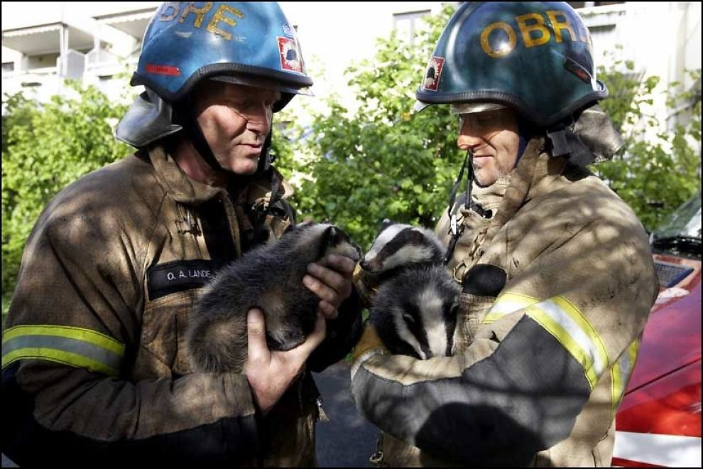 """Heroes"" is how the newspaper VG captioned this photo that led their story about the burning badger babies. ""Dagens helter reddet grevlingbarn fra storbrannen,"" VG, 18 May 2008."