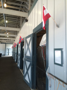 Flags flying on each horse's stable at Kentucky Horse Park