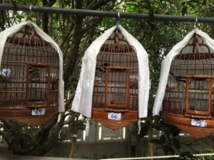 Caged birds for sale at the Yuen Po Street Bird Garden