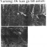 Front page pictures of muskoxen in Östersunds Posten, 1 September 1971.